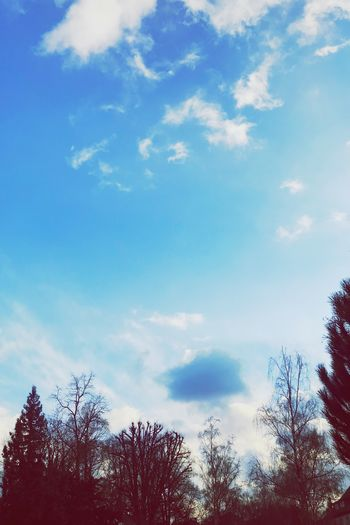 Winter EyeEm Nature Lover EyeEm Skyline Cold Cloudy Sky Blue Winter NewYear Sky Tree Cloud - Sky Low Angle View Nature Beauty In Nature Tranquility Silhouette No People Tranquil Scene Scenics Day Outdoors EyeEm Ready   EyeEmNewHere
