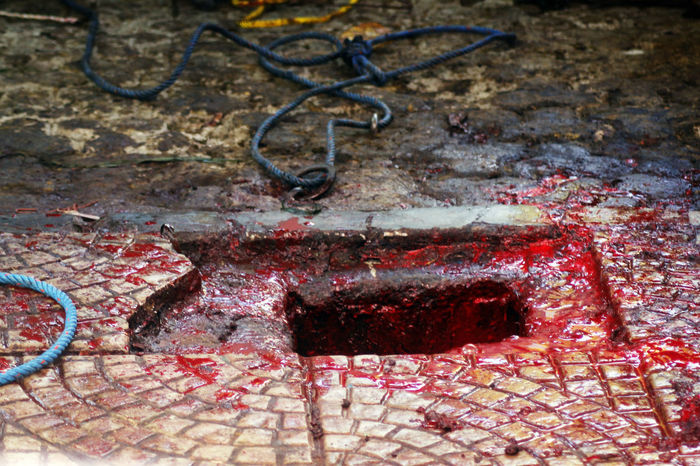 Blood Blood In The Hole INDONESIA Muslim Ritual Qurban Religious Event Sacrifice Slaughter