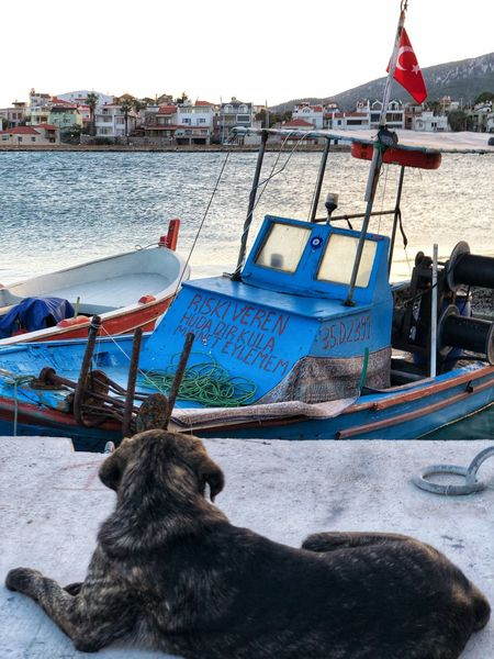🐕 Turkey Ship Lifestyles Dog Animal One Animal Animal Themes Nautical Vessel Vertebrate Day Nature Sea No People