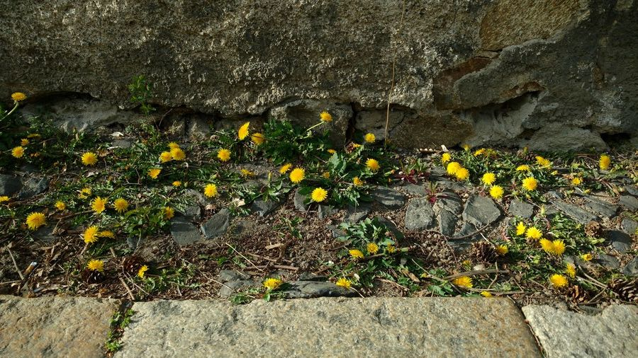 High angle view of flowering plants on rocks