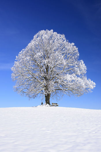 Tree on snow covered field against blue sky