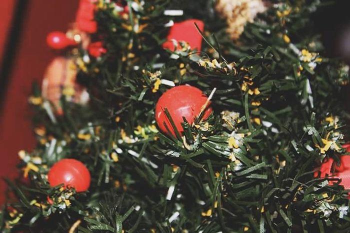 Red Christmas Celebration Christmas Decoration Christmas Tree Tree Pine Cone Nature Sapin Noël Theend Decoration