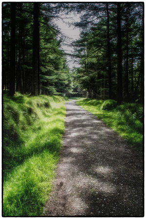 Beauty In Nature Cruagh Woods Day Diminishing Perspective Dublin Dublin Mountains Footpath Forest Grass Green Color Growth Ireland Irelandinspires Ireland🍀 Landscape Long Narrow Nature Road Scenics The Way Forward Tranquil Scene Tranquility Tree Vanishing Point