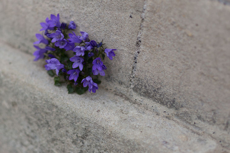 Sandstone and Violets Beauty In Nature Close-up Day Flower Flower Head Fragility Freshness High Angle View Nature No People Outdoors Purple Selective Focus