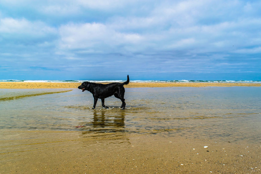 dog beach is always fun Beach Dog Beach Life Beach Photography Beachphotography Blue Sky Dogbeach Dogs Of EyeEm Dog❤ Newport Beach Ocean Ocean Waves Pacific Ocean Waves