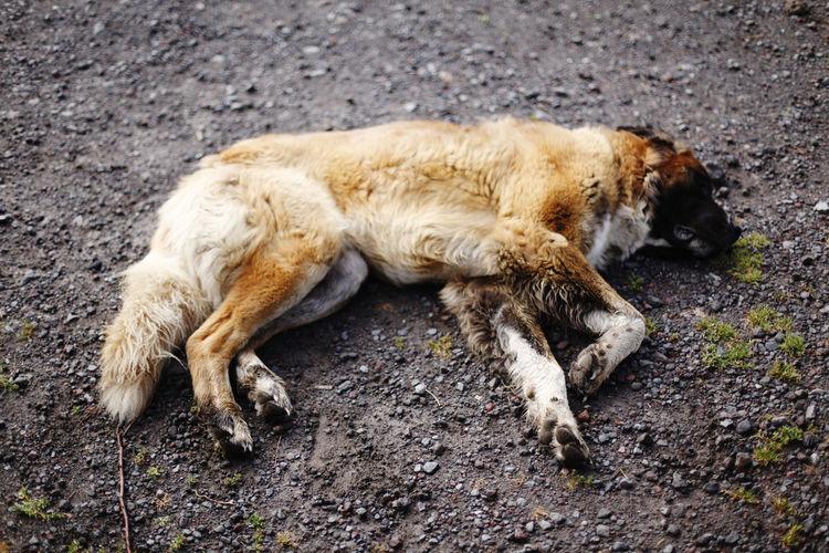 Animal Mammal Animal Themes One Animal Lying Down Relaxation Domestic Pets Domestic Animals No People Cat Feline Vertebrate Sleeping Resting Day Nature Full Length Dog