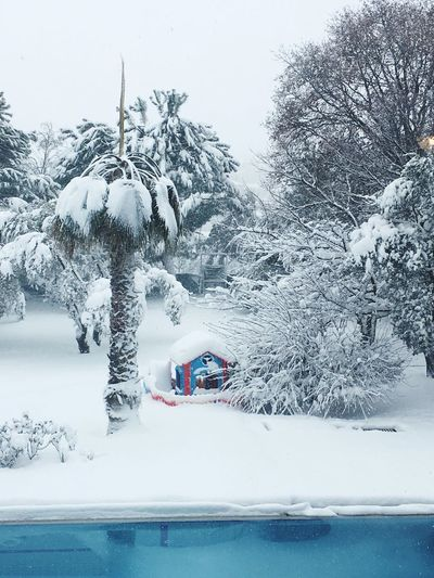 Snow ❄️❄️cold⛄️⛄️