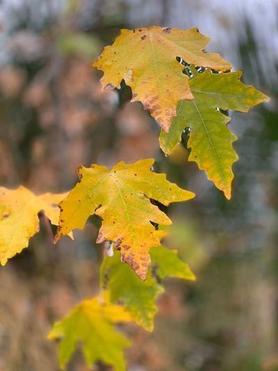 Autumn leaves Autumn Leaves Fremont Lake Elizabeth Plant Part Leaf Autumn Growth Close-up Nature Plant