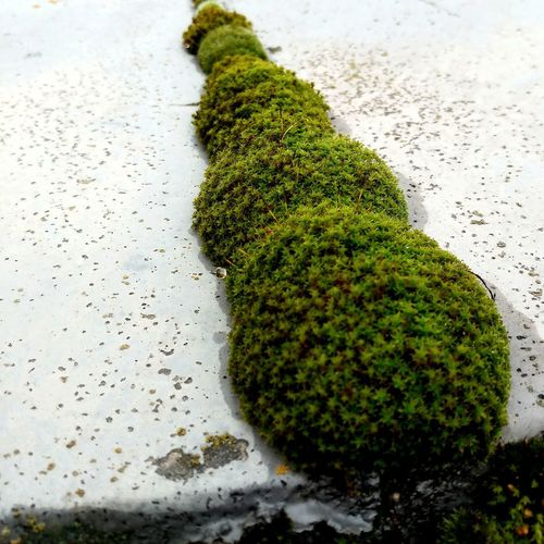 High angle view of moss covered tree trunk