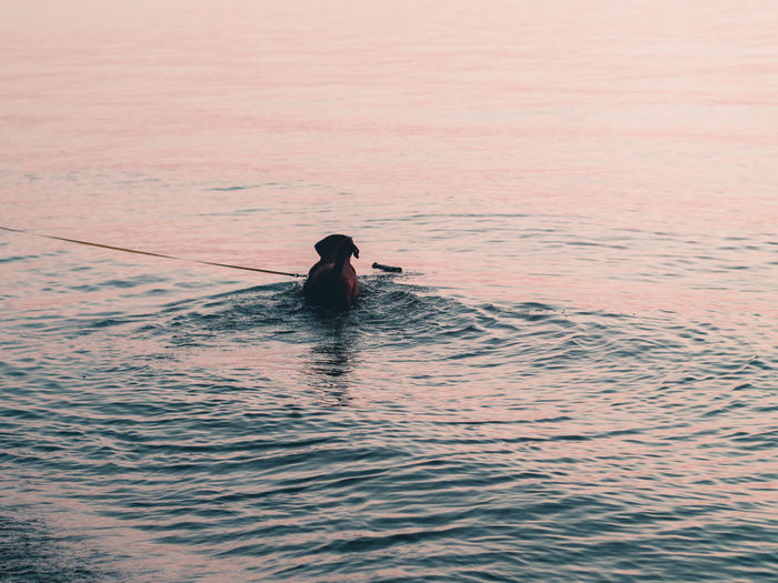 Man in sea against sky during sunset