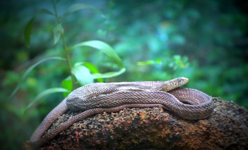 #onesnake #Snake Animal Themes Animals In The Wild Forest One Animal Rock - Object Wildlife