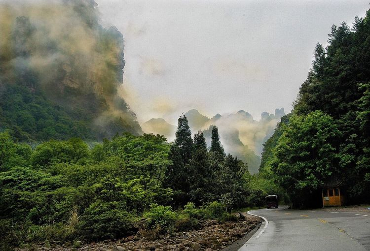 Fog and green Tree Beauty In Nature Mountain Scenics Nature Tranquility Growth Day Tranquil Scene Outdoors Landscape Sky No People Popular Tranquility Plant Popular Photos Forest Beauty In Nature Popular Photo Travel Destinations Nature Green Color