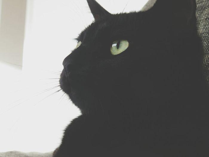 Katze ♥. . Taking Photos Hello World