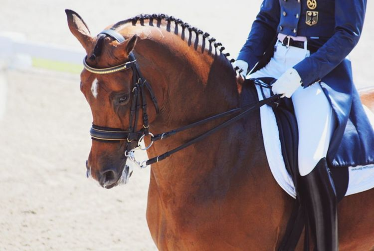 Falsterbo Horseshow ? Horse Horses GrandPrix Dressage Competition Sweden