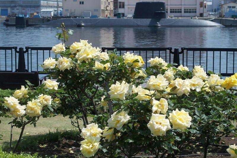 Roses and Submarine 薔薇と潜水艦、横須賀ならではの珍コラボ(笑) Landscape Flowers Eyeemflowerlover Flowerporn Photography Japan Military Submarine Roses EyeEm Best Shots