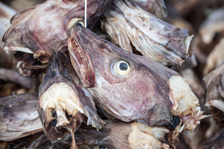 Close-up of dried fishes in market