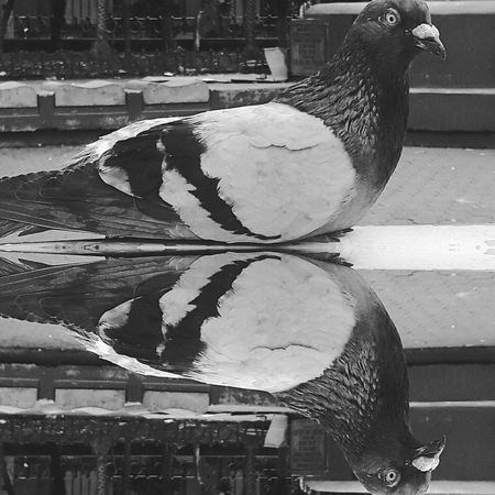 Street Photography City Life City Center Taking Pictures Urban Exploration Urban Animals Still Life Monochromatic Black & White Monochrome _ Collection Sillouette Monochrome Black And White Check This Out Urban Shots City Birdwatching Animal Themes Birds Birds Of EyeEm