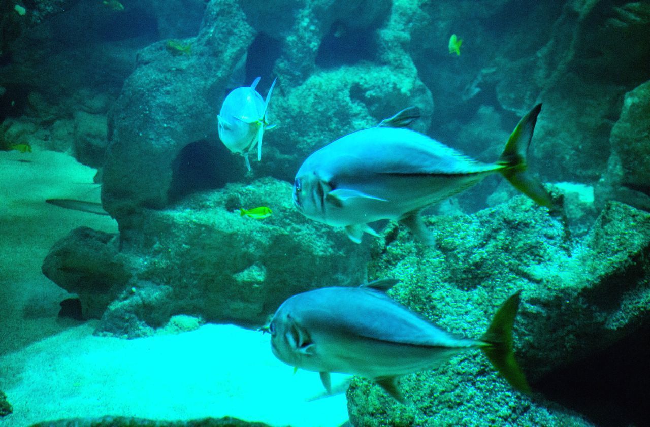 fish, sea life, underwater, animal themes, animals in the wild, swimming, nature, water, wildlife, undersea, aquarium, no people, rock - object, large group of animals, swimming animal, coral, animal wildlife, beauty in nature, close-up, indoors, day, mammal