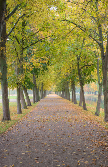 Autumn in city park Autumn Tree The Way Forward Direction Change Plant Leaf Footpath Diminishing Perspective Plant Part Nature Tranquility Park Day No People Beauty In Nature Tranquil Scene vanishing point Treelined Park - Man Made Space Outdoors Tree Canopy