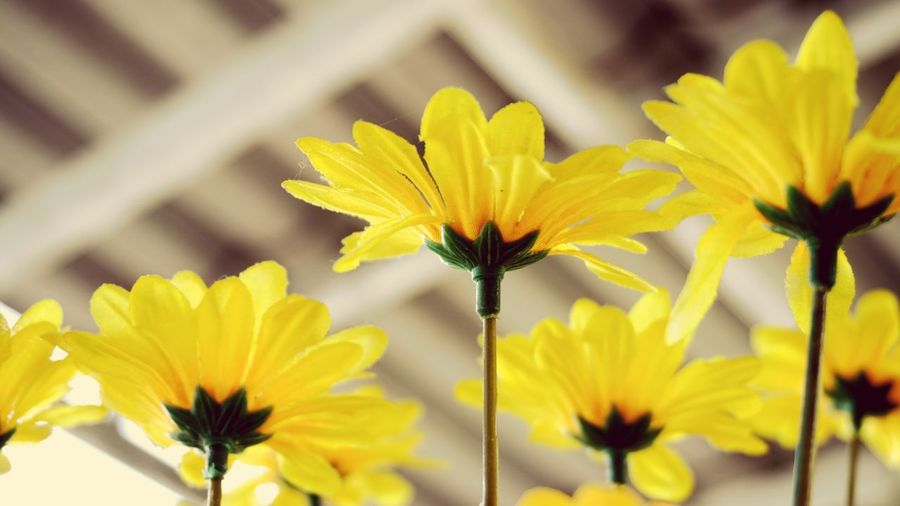 Flower Yellow Petal Fragility Flower Head Plant Blossom Close-up Outdoors Day No People Immitating Nature Immitation Fake Flowers Fake Yellow immitation flowers under outdoor roof.