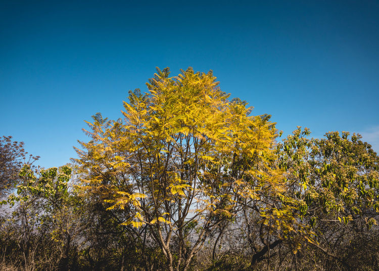 Ancestral Beauty In Nature Blue Branch Day Growth Low Angle View Monte Alban Nature Nature Photography Nature_collection No People Oaxaca Outdoors Prehispanic Ruins Scenics Sky Travel Photography Tree Trees Yellow Neighborhood Map Paint The Town Yellow