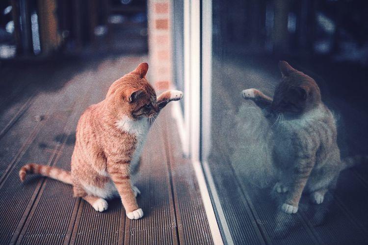 Cats Cat Cat Lovers Winter Cat Winter