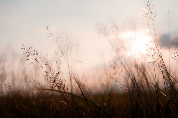 Vintage photo of abstract evening autumn nature background with wild flowers and plants in sunset Nature Sunlight Vintage Style Beauty In Nature Day Field Filed Grass Growth Nature No People Outdoors Plant Scenics Shillouette Sky Sunset Timothy Grass Tranquil Scene Tranquility Wild Flowers