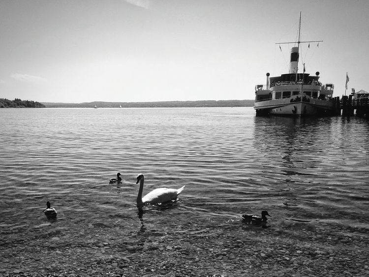 Blackandwhite Monochrome Bnw_friday_eyeemchallenge Bnw_friday_challenge Ammersee Muenchen Shootermag Eye4photography  B&w Nature Connected With Nature