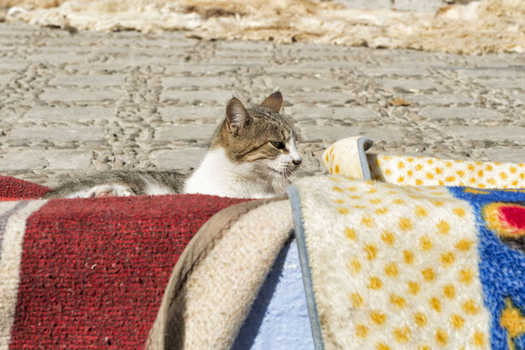 Close-Up Of Cat Sitting On Textile