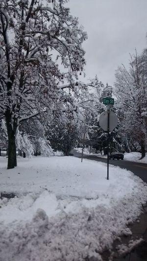Hello World Snow Winter Wonderland Winter