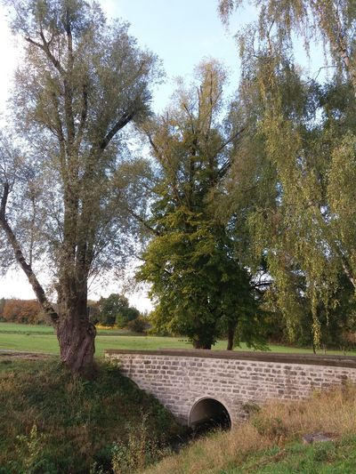 Mühlbach bridge Mühlbach Mühlbachtal Architecture Autumn Beauty In Nature Branch Built Structure Day Grass Growth Nature No People Outdoors Sky Tree