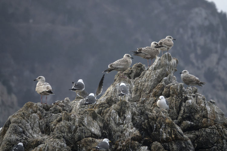 View of Janghohang, Samcheok, Gangwondo, South Korea Animal Themes Animal Wildlife Animals In The Wild Bird Day Flock Of Birds Janghohang Large Group Of Animals Nature No People Outdoors Perching Rock Sea Seagull Seaside