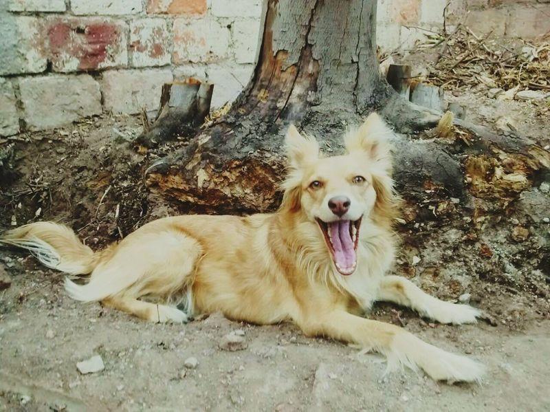First Eyeem Photo Dog Puppy Argentina Hermosa Mendoza Foxy Blonde FirstEyeEmPic Doggie Doggy Love Domestic Animals Smile PrimerFoto Rubia Sonrisa