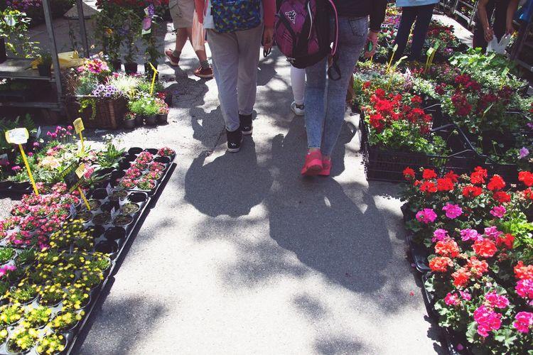 Flower market Market Shopping ♡ Shopping Street Walk Summer Sun Red Pink Colorful Colors Low Section Flower Shadow Sunlight Men Walking Blooming Flower Market Marigold Hibiscus Flower Head In Bloom Petal Flower Shop