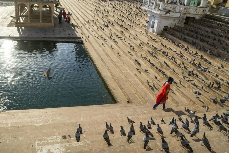 Walking by the Holy Lake. A shot of a woman in Indian woman traditional clothing walking at Holy Lake, Pushkar, India. Walking Lake Holy Color Image India Pigeons Pushkar Lake Steps Outdoor Traditional Indian Cloth Colour Of Life Color Palette