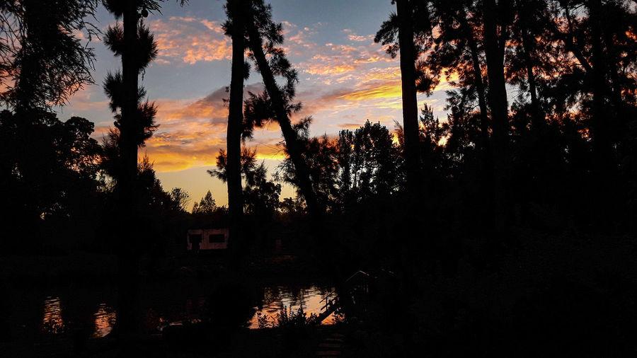 River Delta Islas Tigre Río Espera Atardecer Colors Colores Tree Sunset Silhouette Reflection Sky Calm