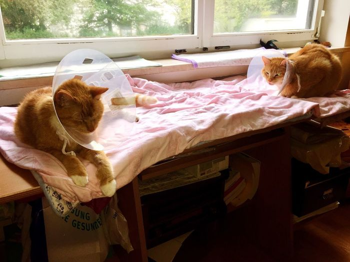The Week On EyeEm Veterinary Science Cat Illnesses Cats 🐱 Katzenleben Katzen 💜 Katzenfotografie Katzenfoto Cat Portrait My Cats❤️ My Cats Better Than Yours
