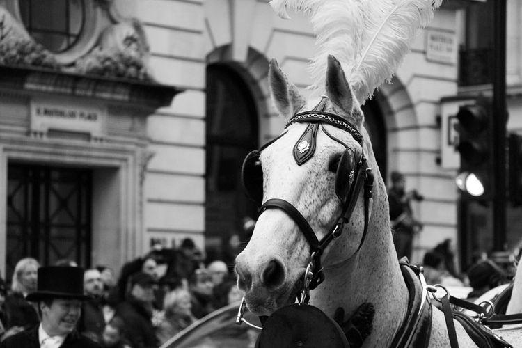 Horse Horse Domestic Animals Mammal Animal Themes Working Animal Bridle One Animal
