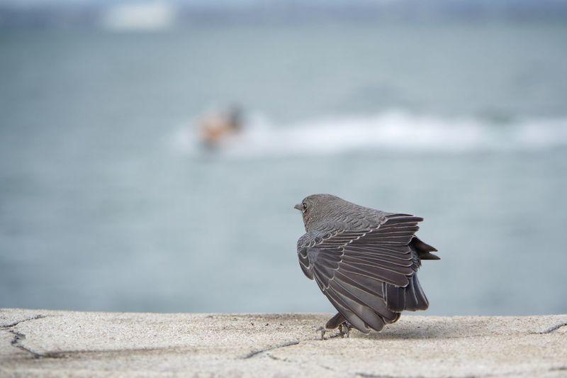 Allez! Bird