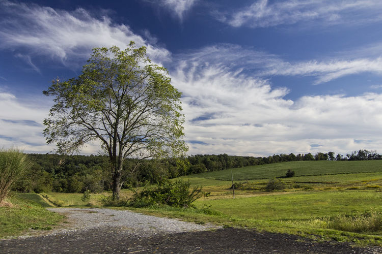 Baltimore County, MD Farm Green Hills Maryland Tree Beauty In Nature Cloud - Sky Countryside Day East Coast East Coast USA Field Grass Landscape Nature No People Outdoors Polarizer Road Scenics Sky Tranquil Scene Tranquility Tree First Eyeem Photo
