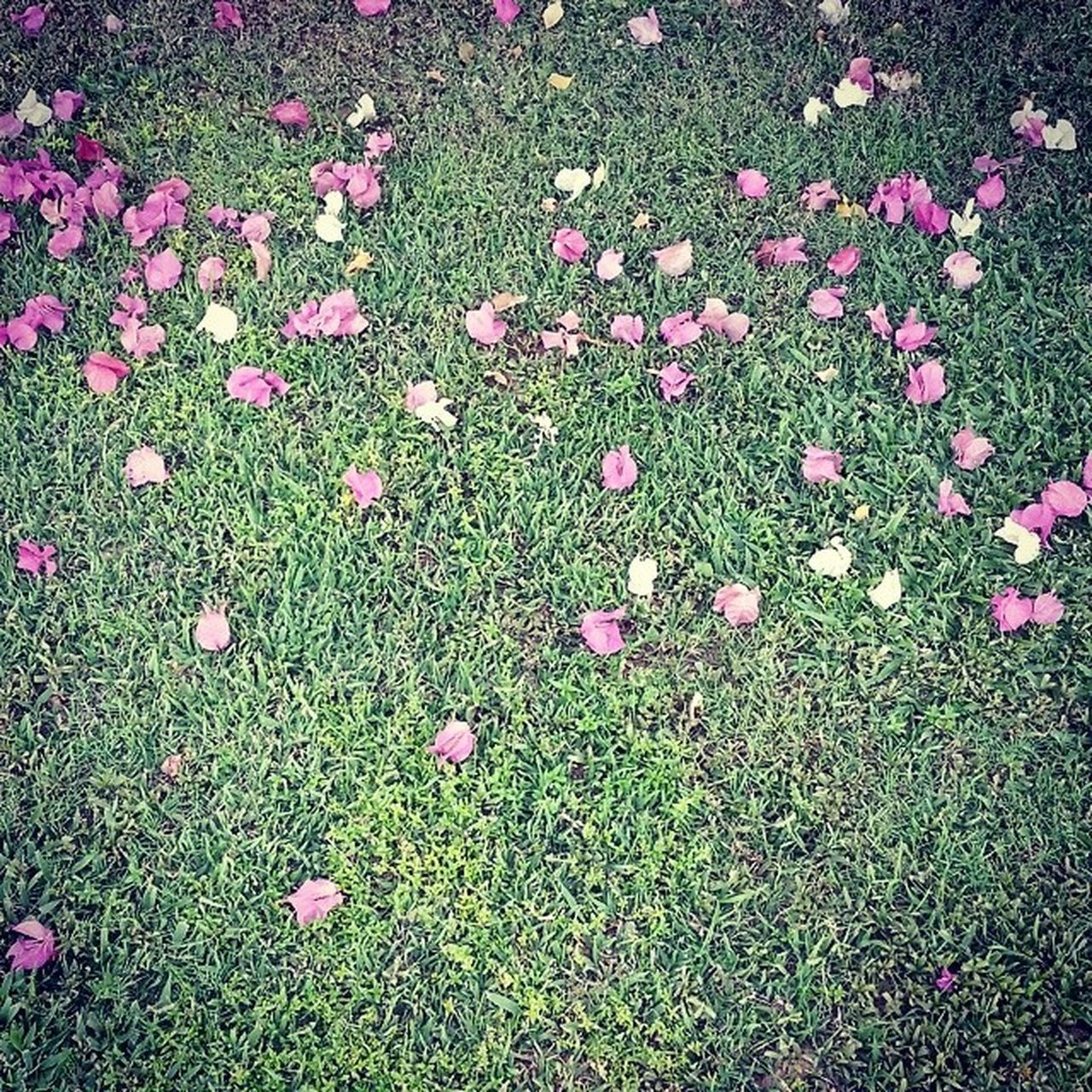 grass, nature, no people, high angle view, flower, growth, field, day, outdoors, pink color, green color, beauty in nature, tranquility, plant, fragility, freshness, flower head, close-up