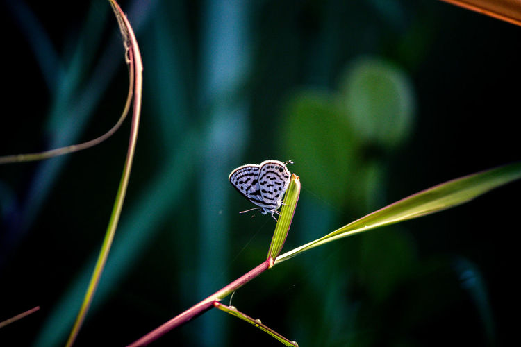 Little beauty in low-light. Animal Wildlife Insect Close-up Beauty In Nature Focus On Foreground Plant Nature Leaf Selective Focus Butterfly - Insect Butterfly Blade Of Grass