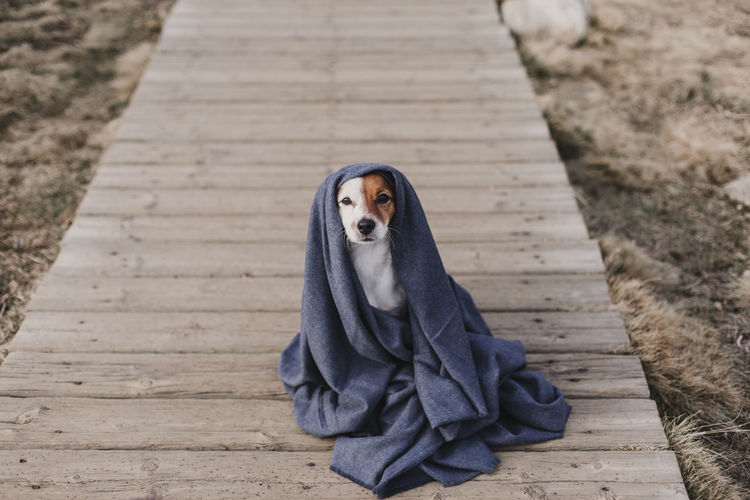 High angle portrait of dog with scarf sitting on footpath