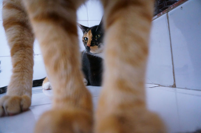 CLEOPATRA On Focus 📸 🔎 👀 Thoughtful Beauty Calm Zenful In The Zone Paws Between The Legs Contemplating Pondering Contemplative Contemplating Beauty Relaxing Chilling Cat Cats Cat Lovers Cat Lover Beautiful Animal Themes Family Pet Portrait Cat Portrait