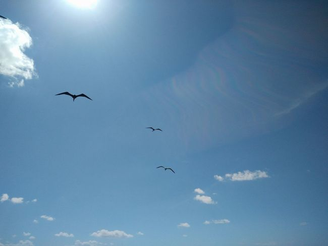 Sky view with birds in San Pedro Belize Blue Sky Clouds And Sky Birds San Pedro Belize Ambergris Caye Tropical Paradise