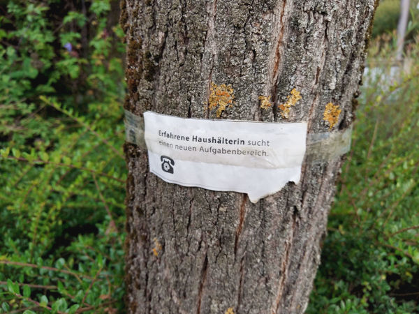 note on a tree trunk with the message that a housekeeper is looking for work Tree Trunk Trunk Tree Communication Text Message Information House Keeper Job Search Searching Sign German Language
