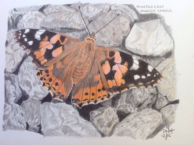 Butterfly - Insect Art, Drawing, Creativity Art And Craft ArtWork Butterfly My Artwork