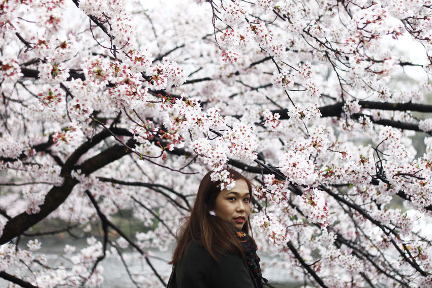 Asian  Asian Girl Blossom Cherry Blossom Cherry Tree Flower Inokashira Japan Nature Pink Color Springtime Tokyo Young Adult First Eyeem Photo