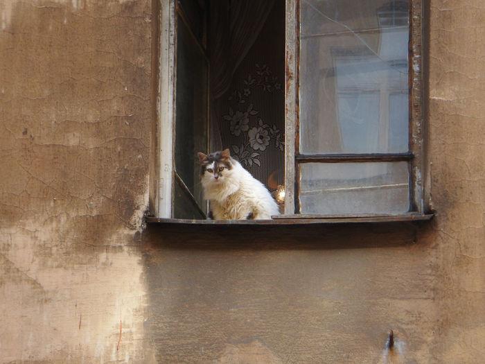 Cat sitting on window of building