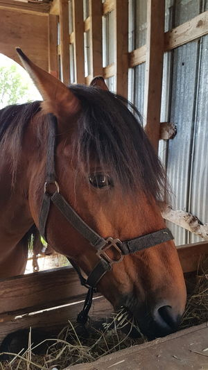 Horse Domestic Animals Animal Themes One Animal Brown No People Close-up Outdoors Day
